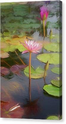 San Juan Capistrano Water Lilies Canvas Print