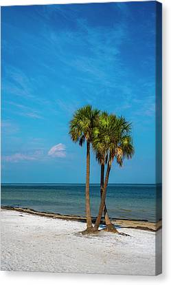 Sand And Palms Canvas Print by Marvin Spates