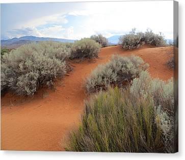 Sand And Sagebrush Canvas Print