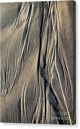 Sand Angel Canvas Print by Tim Gainey