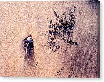 Canvas Print featuring the photograph Sand Crab Marks 2 by Lyle Crump