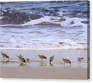 Sand Dancers Canvas Print