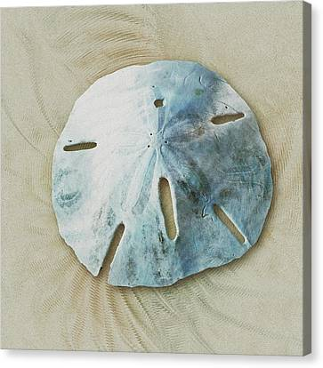 Sand Dollar Canvas Print by Anastasiya Malakhova