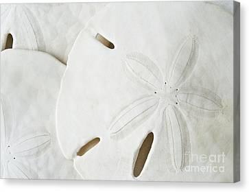 Sand Dollars Canvas Print by Bill Brennan - Printscapes