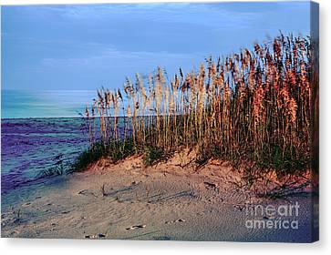 Sand Dune Sea Oats Sunrise Outer Banks Canvas Print by Dan Carmichael