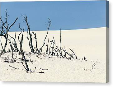Sand Dune With Dead Trees Canvas Print by Chevy Fleet
