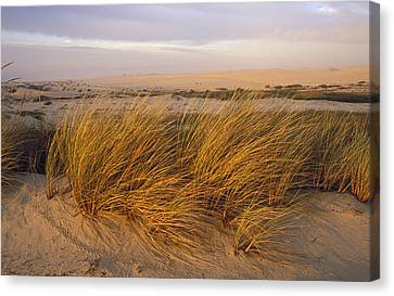 Sand Dunes At Oso Flaco Nature Canvas Print by Rich Reid