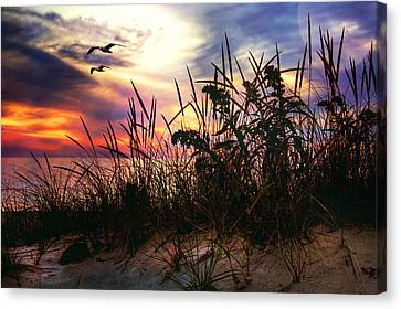 Sand Dunes At Sunset - Cape Cod Canvas Print by Joann Vitali