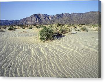 Sand Dunes & San Ysidro Mountains At El Canvas Print by Rich Reid