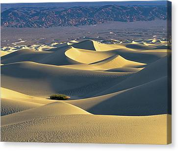 Sand Dunes Sunrise Canvas Print