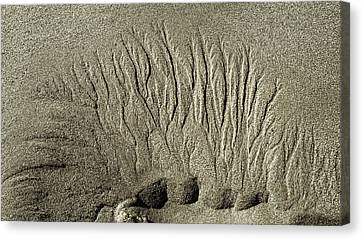 Sand Patterns On The Beach  1 Canvas Print by Steven Ralser