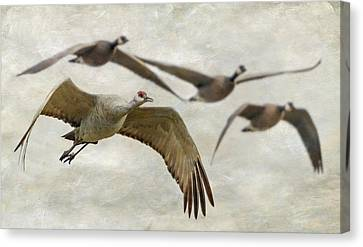 Canvas Print featuring the photograph Sandhill Crane And Company by Angie Vogel