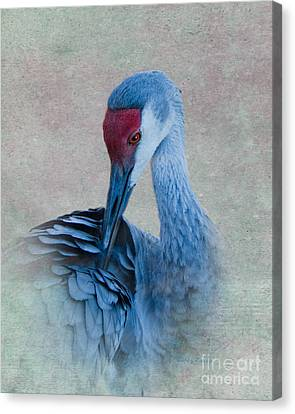 Sandhill Crane Canvas Print by Betty LaRue