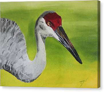Sandhill Crane Canvas Print by D Turner