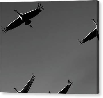 Canvas Print featuring the photograph Sandhill Crane In Flight by Britt Runyon