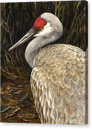 Sandhill Crane - Realistic Bird Wildlife Art Canvas Print