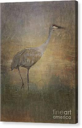 Sandhill Crane Watercolor Canvas Print