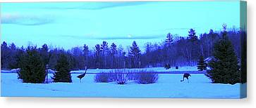 Sandhill Cranes Reflecting In The Moonlight Canvas Print by Randy Rosenberger