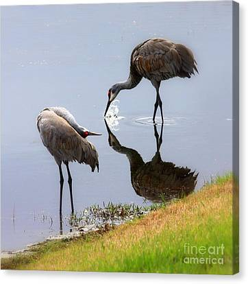 Sandhill Cranes Reflection On Pond Canvas Print