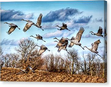 Canvas Print featuring the photograph Sandhill Cranes by Sumoflam Photography