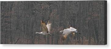 Canvas Print featuring the photograph Sandhills In Flight by Shari Jardina