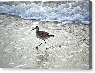 Sandpiper Escaping The Waves Canvas Print
