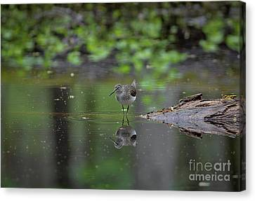 Canvas Print featuring the photograph Sandpiper In The Smokies by Douglas Stucky