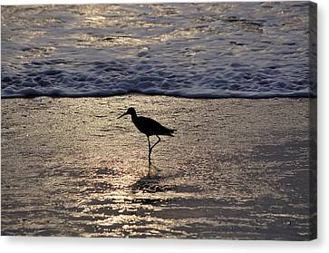 Sandpiper On A Golden Beach Canvas Print