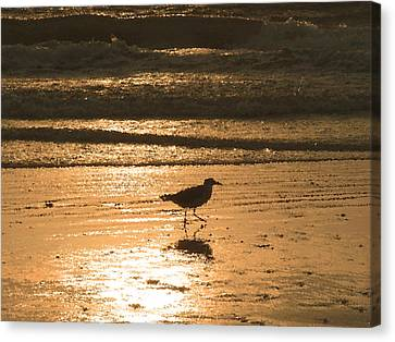 Canvas Print featuring the photograph Sandpiper by Peg Urban
