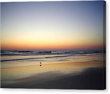 Sandpiper Sunrise Canvas Print by Cheryl Waugh Whitney