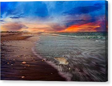 Sandpiper Sunrise Canvas Print by Betsy Knapp