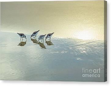Sandpipers At La Jolla Shores Beach, La Jolla, California Canvas Print