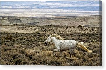 Sandwash Stallion Galloping Canvas Print by Joan Davis