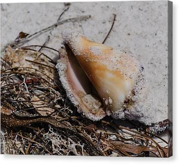 Sandy Seashore Treasures Canvas Print