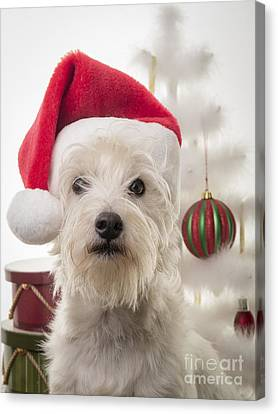 Santa Dog Is Coming To Town Canvas Print by Edward Fielding