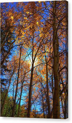 Canvas Print featuring the photograph Santa Fe Beauty II by Stephen Anderson