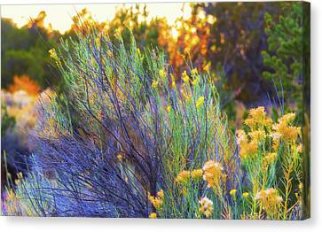 Canvas Print featuring the photograph Santa Fe Beauty by Stephen Anderson