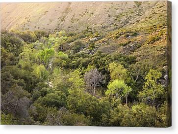Canvas Print featuring the photograph Santa Ysabel Creek At Boden Canyon by Alexander Kunz