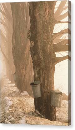 Sap Buckets. Underhill, Vermont Canvas Print by George Robinson