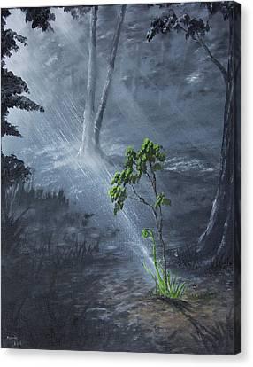 Sapling Canvas Print by Adam Morris