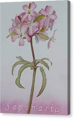 Saponaria Canvas Print by Ruth Kamenev