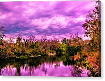 Canvas Print featuring the photograph Sarasota Symphony 2 by Madeline Ellis