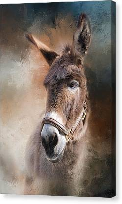 Canvas Print featuring the photograph  Lil Sassafrass by Robin-Lee Vieira