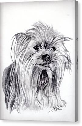 Yorkie Lady Canvas Print by Beverly Johnson