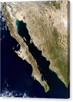 Satellite View Of The Gulf Of California Canvas Print