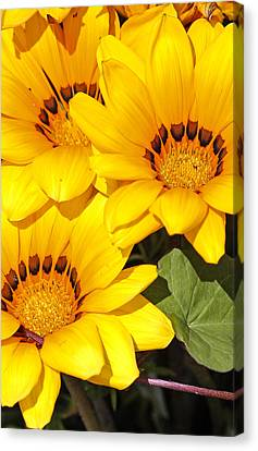 Canvas Print featuring the photograph Satin Yellow Florals by E Faithe Lester