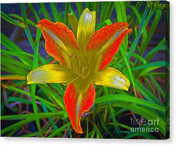 Saturated Day Lily Canvas Print