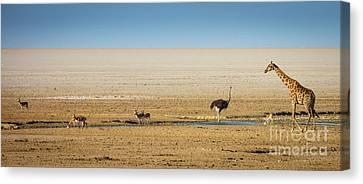 Ostrich Canvas Print - Savanna Life by Inge Johnsson