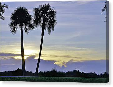 Savanna Sunrise Canvas Print by Don Youngclaus