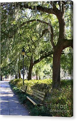 Savannah Benches Canvas Print by Carol Groenen